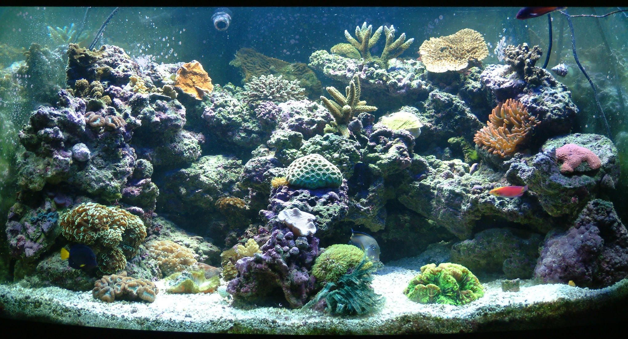 kinds of saltwater aquariums namely 1) ?fish only? or 2) ?fish ...